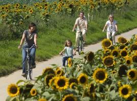 fietsen haspengouw pachthof